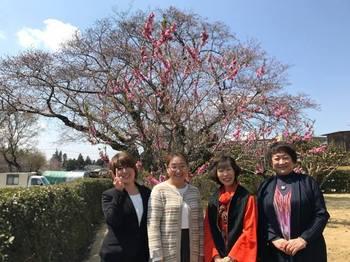 桜前2.jpg